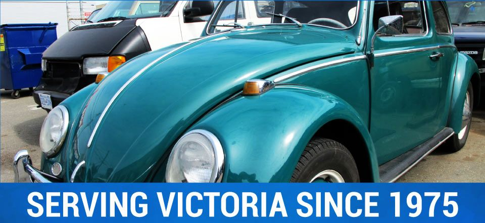 Serving Victoria Since 1975 | blue bug